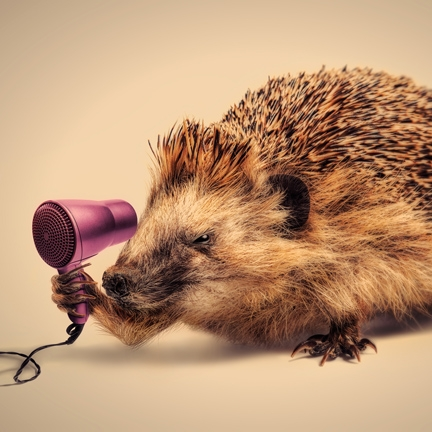 Hedgehog vs hairdryer
