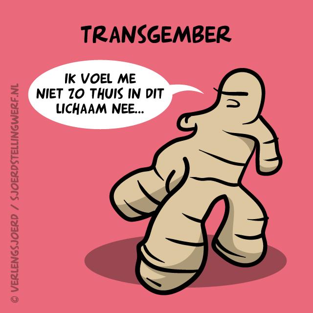 Transgember